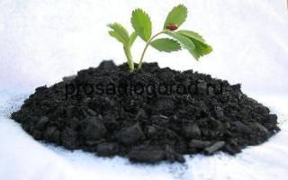 Древесный уголь как удобрение для огорода, состав, видео
