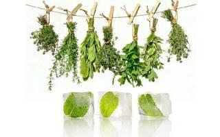 Как заготовить пряные травы на зиму — приправы, с солью, видео