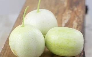 Огурец-лимон (хрустальное яблоко) — особенности растения, видео