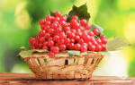 Калина, полезные свойства и противопоказания к применению