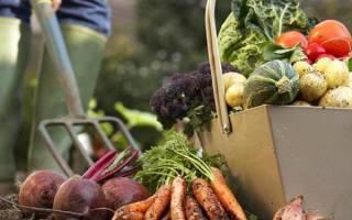 Самые полезные и питательные овощи для дачных грядок — мнение зарубежных фермеров