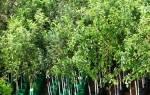 Плодовые деревья — правила посадки деревьев разных видов, выбор саженцев, видео
