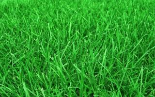 Какие растения забивают сорняки на газоне, огороде и в саду, видео