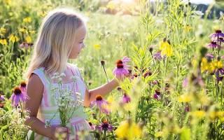 Луговые цветы — фото и названия желтых, синих, фиолетовых полевых цветов, видео