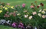 Июнь — месяц посадки многолетников, удаления сорняков, полив, удобрение цветников, видео