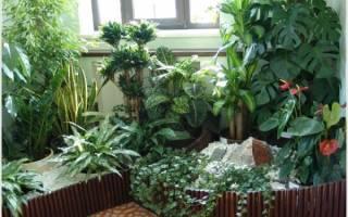 Зимний сад — идеи оформления в разных стилях, видео
