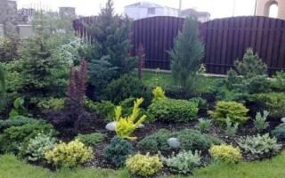 Особенности клумбы из хвойных растений — схемы, видео, фото