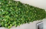 Быстрорастущие комнатные растения — подборка лучших растений для дома, видео