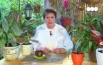 Аглаонема — уход в домашних условиях, как сделать более кустистой, фото, видео