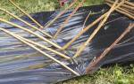 Ива — выбор, заготовка и посадка черенков на черную пленку, видео