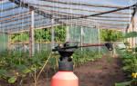 Подкормка огурцов в теплице — когда и чем удобрять, видео