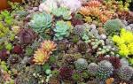 Интересные идеи клумб с многолетними цветами