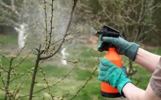 Препараты для весенней обработки сада — обзор и правила использования, видео