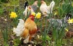 Хлопоты по животноводству в мае, выращивание молодняка в домашней ферме, видео