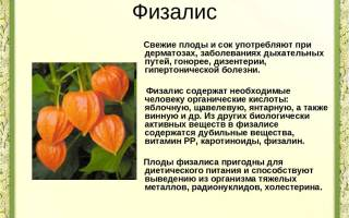 Физалис и его полезные свойства с фото — Glav-Dacha.ru