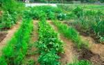 Мульча – «одеяло» для огорода , видео