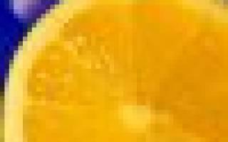 Выгонка крокусов в домашних условиях к 8 Марта, пошаговая инструкция, видео