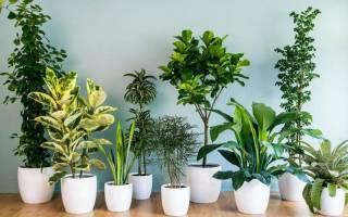 Не требующие особого ухода цветы для украшения комнат, подбор, видео