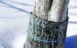 Декабрь в саду — защита деревьев и кустарников от морозов, обработка против вредителей, видео