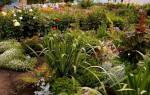 Август на клумбах дачи — сбор семян, пересадка многолетников, видео