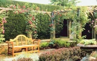 Вертикальное озеленение сада, выбор растений, видео