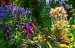 Какие многолетние цветы посадить на клумбе — фото, видео
