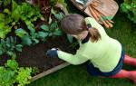 Теплые грядки и удивительный огород Игоря Лядова, пошаговое изготовление грядок своими руками, видео