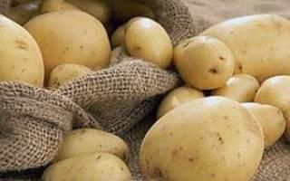 Фото и описание болезней картофеля — альтернариоз, черная ножка, фитофтороз, парша