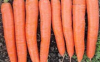 Как вырастить крупную морковь по Митлайдеру + видео