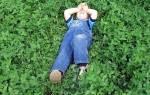Сад — как увлажнять территорию в засушливой зоне, рекомендации, видео