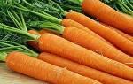 Морковь – средство от болезней, полезные свойства, видео