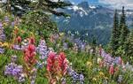 Медоносные травы для пчел — когда специально высевают медоносы в Сибири, фото с названиями, видео