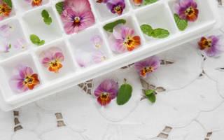 Съедобные цветы в кулинарии для украшения блюд, какие цветы едят