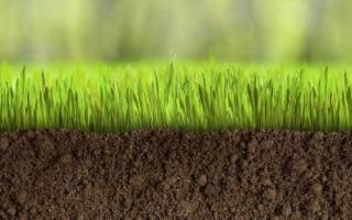 Травосмесь для газона — какая лучше, что выбрать, обзор трав для газона