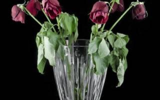 Как укоренить розу из букета: подготовка черенков, способы, видео