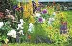 Как сделать клумбу непрерывного цветения, видео