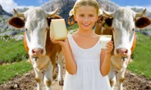 Сколько корова дает молока в сутки, жирность молока, использование доильных аппаратов, как правильно доить корову, видео