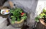 Цветочный горшок — как сделать красивую емкость из цемента, видео