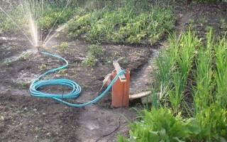 Распылители для полива огорода — советы по выбору, видео