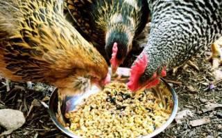 Чем кормить кур несушек чтобы лучше неслись в домашних условиях, состав и норма корма, какую траву можно давать, видео