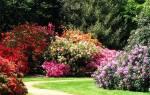 Декоративные кустарники — виды и сорта для садов средней полосы России, видео