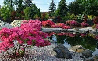 Красивые декоративные кустарники для сада и дачи — фото с названиями, низкие и высокие кусты, фото, видео