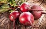 Красная свекла — полезные свойства и противопоказания, польза и вред, видео