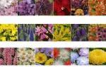Клумба из однолетних цветов, подбор семян для создания цветника, видео