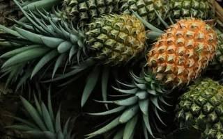 Ананас — как выбрать, дозреть, какие ананасы лучше, видео