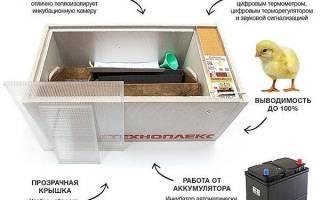 Инкубатор Блиц — обзор моделей на 48, 72, 120 яиц с автоматическим поворотом яиц, видео