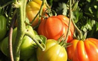 Принципы пасынкования томатов — видео