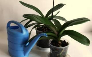 Медный купорос для орхидей — как проводить обработку, как приготовить раствор, видео