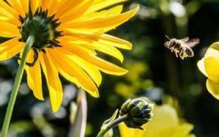 Жужелица — защитник сада и огорода, чем питается, виды, видео