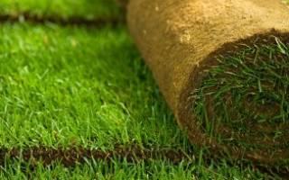 Живой газон в рулонах — что это такое, преимущества, особенности